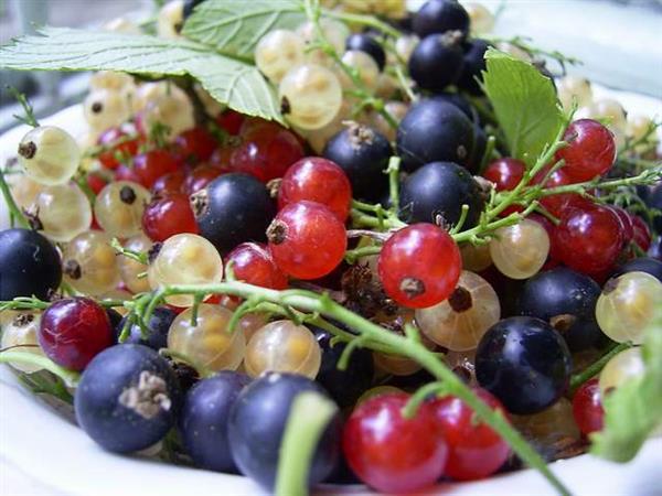 Ягоды в саду. Как собрать свой урожай?