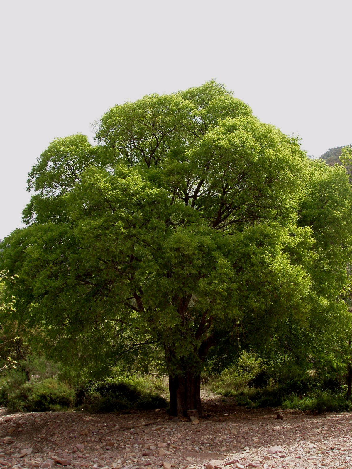Какие деревья выбрать для дизайна дачного участка?