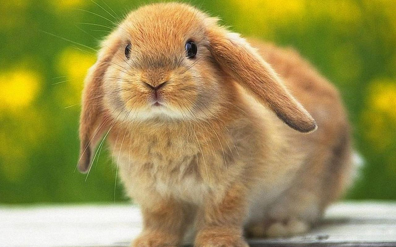 Кролиководство на даче
