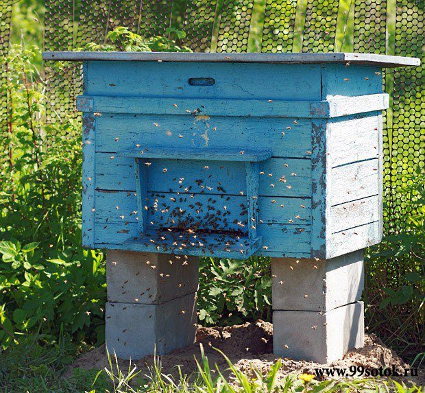 Пчёлы и улей своими руками
