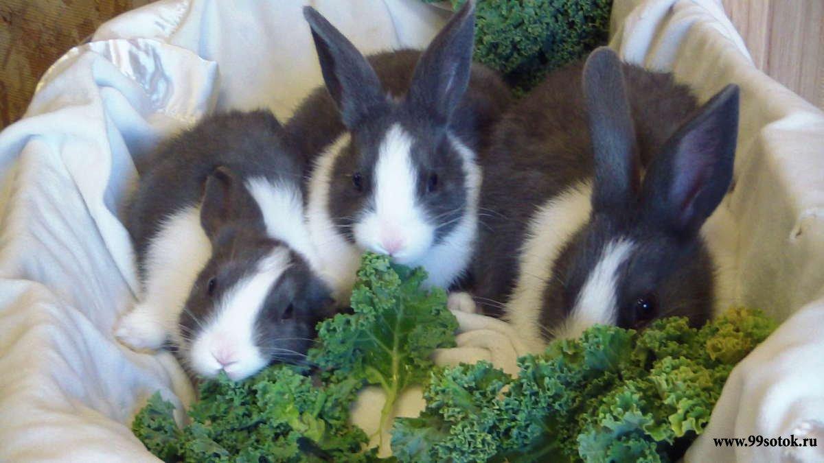 Как самостоятельно построить помещение для кроликов