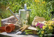 Садоводство как хобби