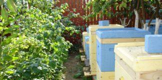 Ульи для пчел или пчелы на даче